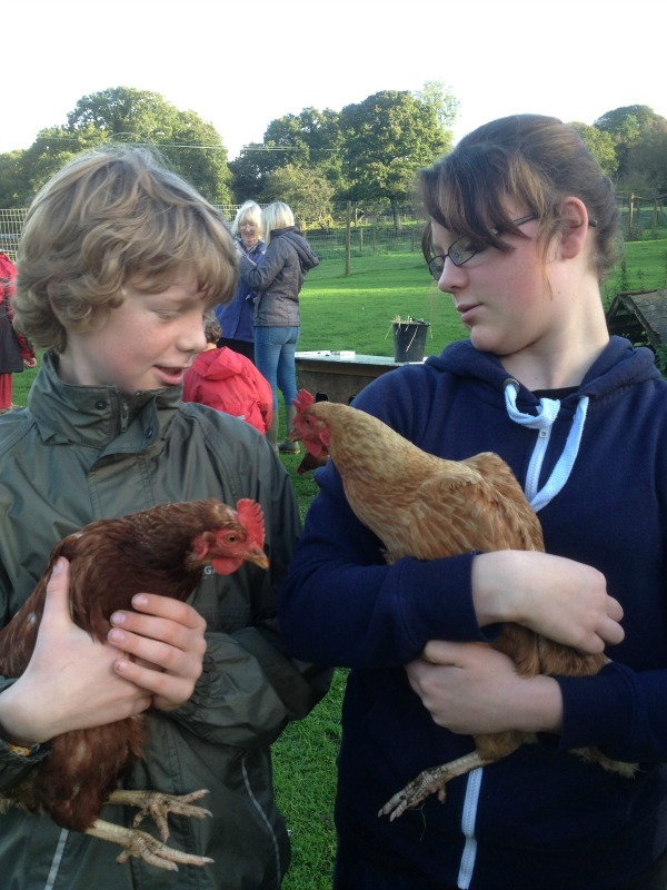coombe mill chickens